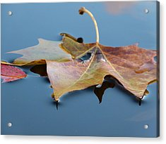 Acrylic Print featuring the photograph Fall Reflections by Jane Ford