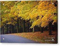 Fall Road And Trees Acrylic Print by Elena Elisseeva