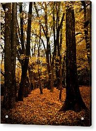 Fall Scene In Bidwell Park Acrylic Print