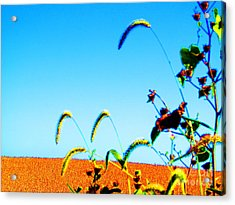 Fall Skies On Soybeans Farm Acrylic Print by Tina M Wenger