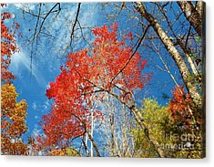 Acrylic Print featuring the photograph Fall Sky by Patrick Shupert