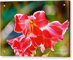 Fall Sparkle Gladiola Acrylic Print by Cynthia Syracuse