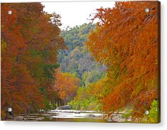 Fall Spectacular Acrylic Print by David  Norman