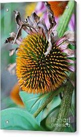 Fall Spikes Acrylic Print