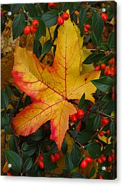 Fall Splendor Acrylic Print by Cheryl Perin