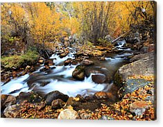 Fall Stream Acrylic Print by Darryl Wilkinson