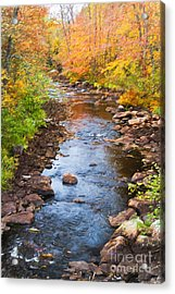 Fall Stream Acrylic Print