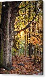 Fall Sunset Acrylic Print by Jennifer  King