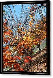 Fall Time Acrylic Print by Arik Baltinester