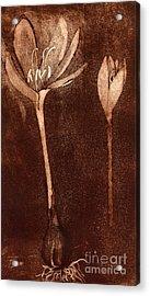 Fall Time - Autumn Crocus Meadow Safran Acrylic Print