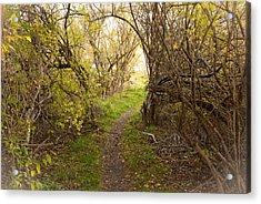 Fall Trail Acrylic Print by Frank Winters