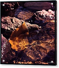 Acrylic Print featuring the photograph Fall by Travis Burgess