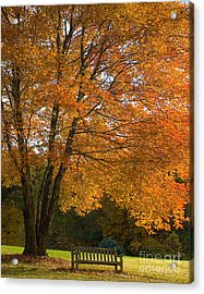 Fall Tree And Bench Acrylic Print