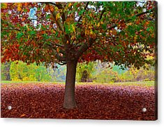 Fall Tree View Acrylic Print