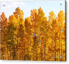 Acrylic Print featuring the photograph Fall Trees 8x10 Crop by Kate Avery