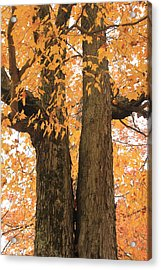 Acrylic Print featuring the photograph Fall Trees by Amazing Jules