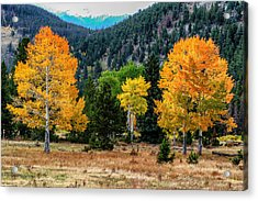 Fall Trees Acrylic Print