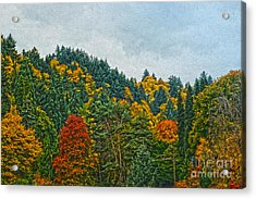 Fall Trees Acrylic Print by Nur Roy