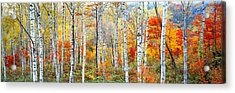 Fall Trees, Shinhodaka, Gifu, Japan Acrylic Print by Panoramic Images