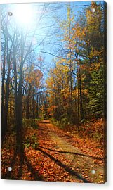 Fall Vermont Road Acrylic Print by Alicia Knust