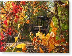 Acrylic Print featuring the photograph Fall View by Alicia Knust