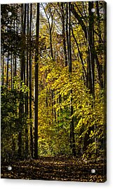 Fall Walk In The Woods Acrylic Print