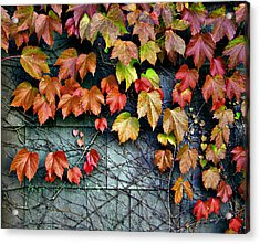 Fall Wall Acrylic Print
