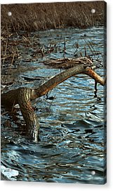 Fall Waters Acrylic Print by Mike Feraco