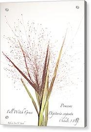 Fall Witch Grass Acrylic Print