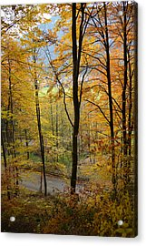 Fall Woods Acrylic Print by Marie Sullivan
