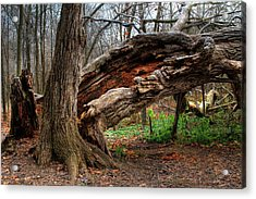 Acrylic Print featuring the photograph Fallen 1 by Jim Vance
