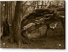 Acrylic Print featuring the photograph Fallen 2 by Jim Vance