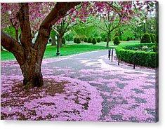 Fallen Blossoms Acrylic Print