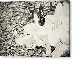 Fallen Bouquet Acrylic Print by BandC  Photography