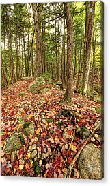 Fallen Color Acrylic Print by James Steele