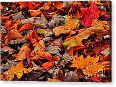 Fallen Colors Acrylic Print