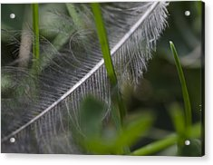 Fallen Feather Acrylic Print