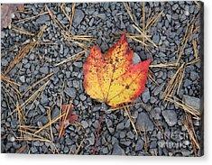 Acrylic Print featuring the photograph Fallen Leaf by Dora Sofia Caputo Photographic Art and Design
