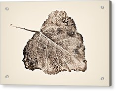 Fallen Leaf In Antique T Acrylic Print