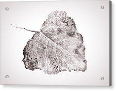 Fallen Leaf In Bwt Acrylic Print