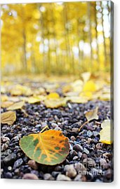 Acrylic Print featuring the photograph Fallen Leaf by Kate Avery
