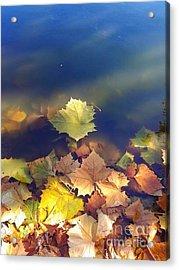 Fallen Leaf Acrylic Print by Susan Townsend