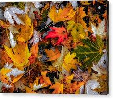 Fallen Leaves Acrylic Print by Dennis Bucklin