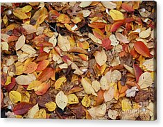 Acrylic Print featuring the photograph Fallen Leaves by Dora Sofia Caputo Photographic Art and Design
