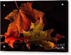 Fallen Leaves Acrylic Print by Judy Wolinsky