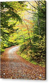 Fallen Leaves Litter A Forest Road Acrylic Print by Robbie George