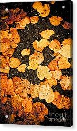Fallen Leaves Acrylic Print by Silvia Ganora