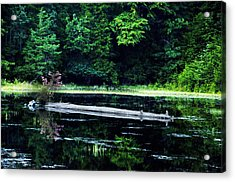 Fallen Log In A Lake Acrylic Print