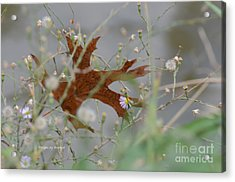 Acrylic Print featuring the photograph Fallen Oak Leaf Caught In Weeds by Debby Pueschel