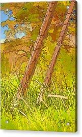 Fallen Pines Acrylic Print